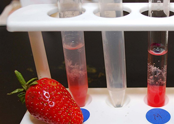 Photo of the test tubes with strawberry DNA extract
