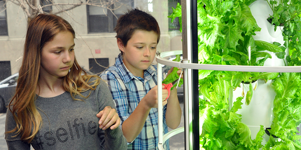 Aeroponic Tower Garden